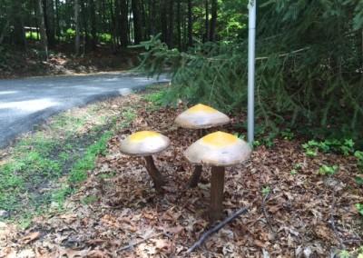 wood mushrooms